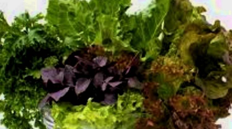 salad 2 cut